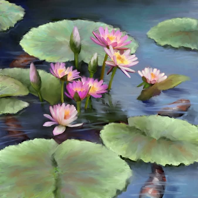 Lotus and Lily Pads