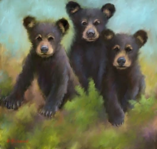 Smokey Mountain Black Bears