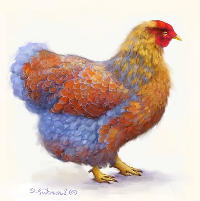 Blue-laced Red Wyandotte